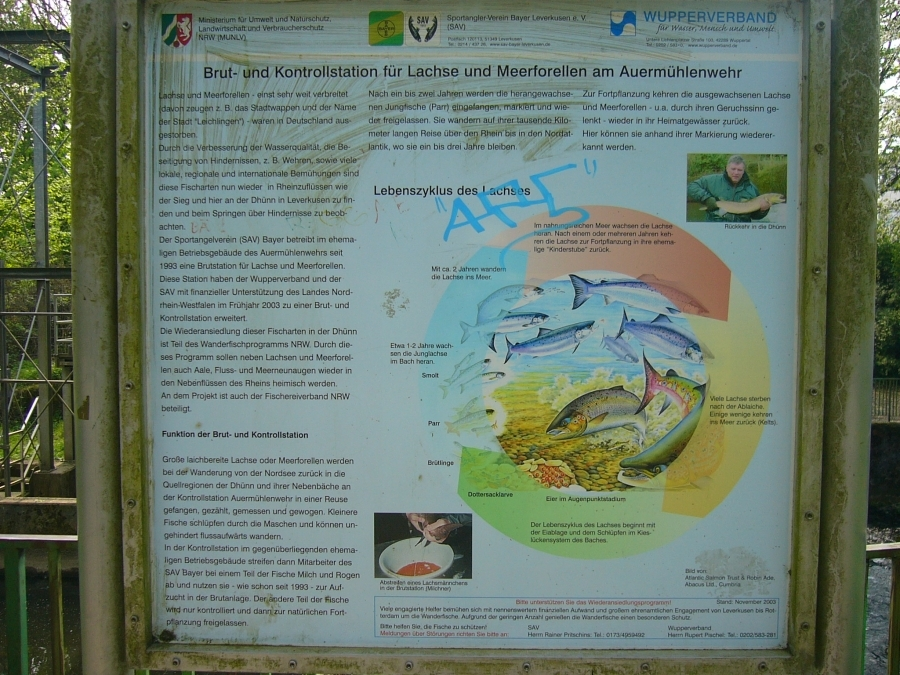 Fischvolkszählung