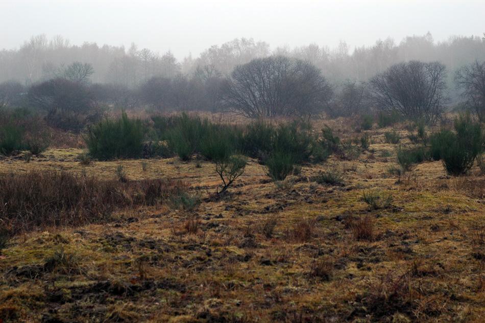 jorzik-wahner-heide-25-02-2012dsc00009